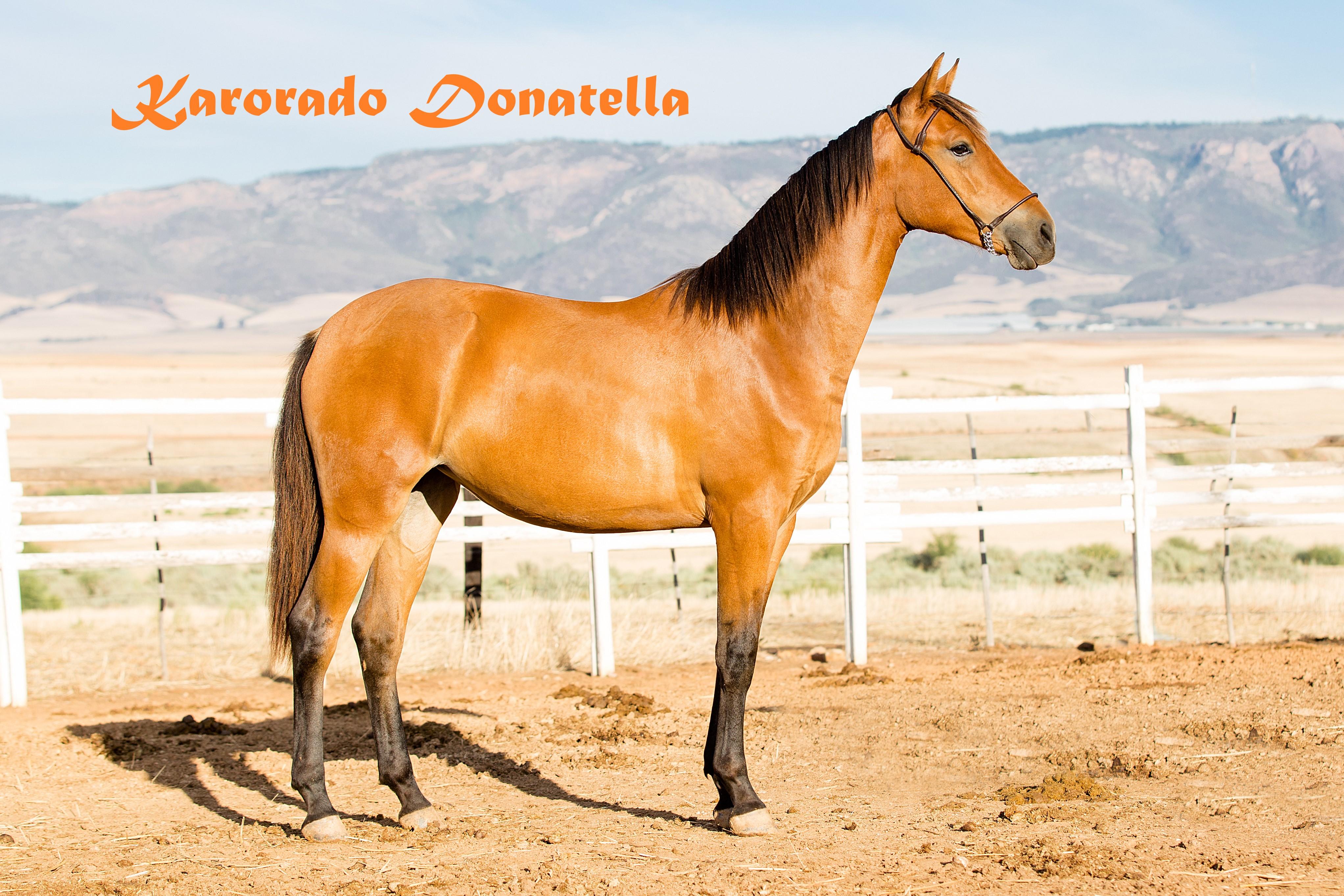 Donatella1