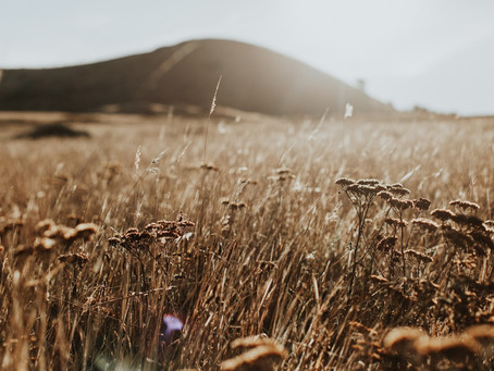 He Has Not Abandoned His Kindness to the Living or the Dead: Lessons From Ruth Chapter Two