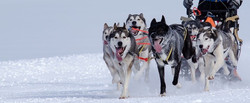 huskies-2279627__480
