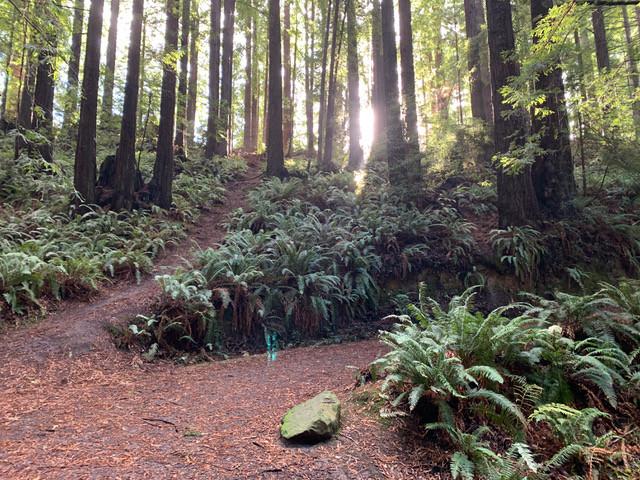 Hiking Pleasure