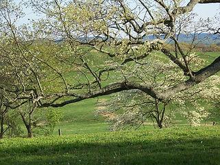 Tree and Pasture.jpg