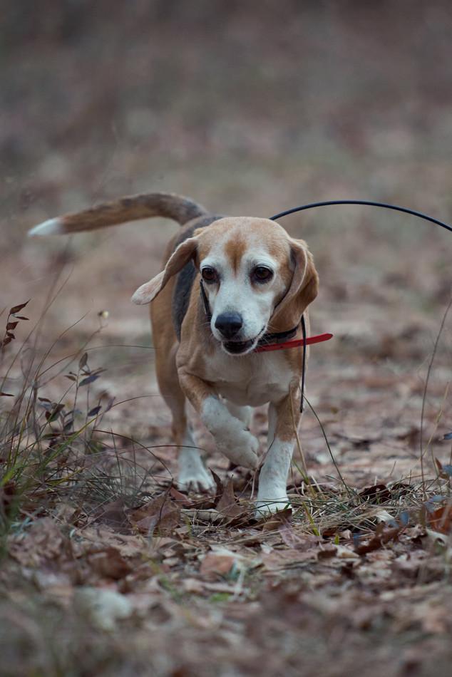 2020-01-05_beagles_a7r3_0355.jpg