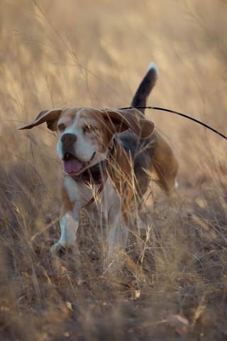 2020-01-05_beagles_a7r3_0206.jpg