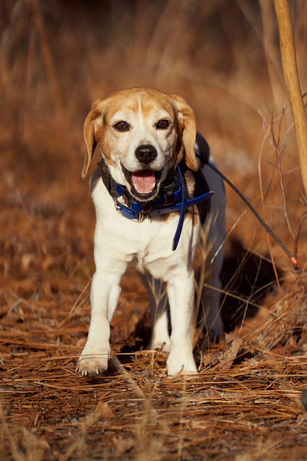 2020-01-05_beagles_a7r3_0179.jpg