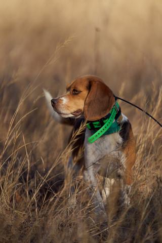 2020-01-05_beagles_a7r3_0221.jpg