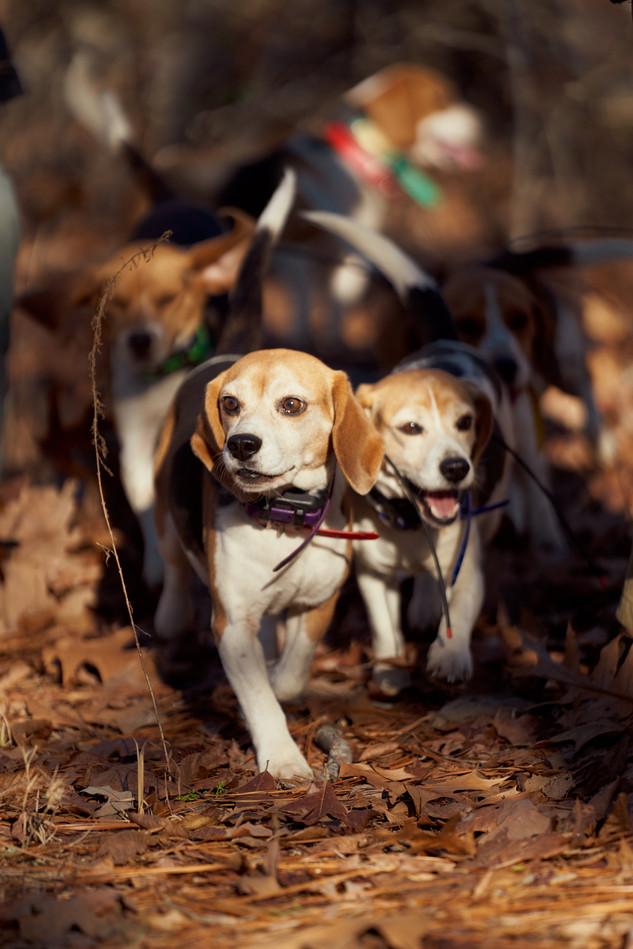2020-01-05_beagles_a7r3_0027.jpg