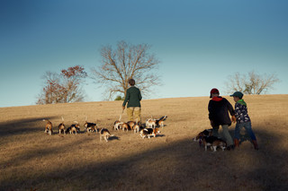 2020-01-05_beagles_a7r3_0473.jpg
