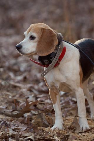 2020-01-05_beagles_a7r3_0342.jpg