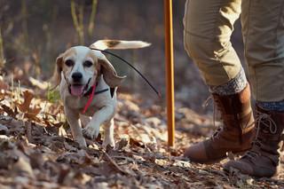 2020-01-05_beagles_a7r3_0359.jpg
