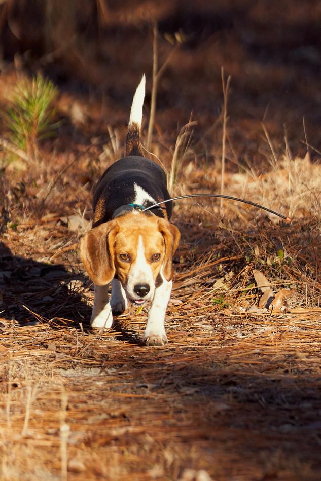 2020-01-05_beagles_a7r3_0307.jpg