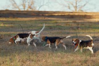 2020-01-05_beagles_a7r3_0392.jpg