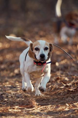 2020-01-05_beagles_a7r3_0374.jpg