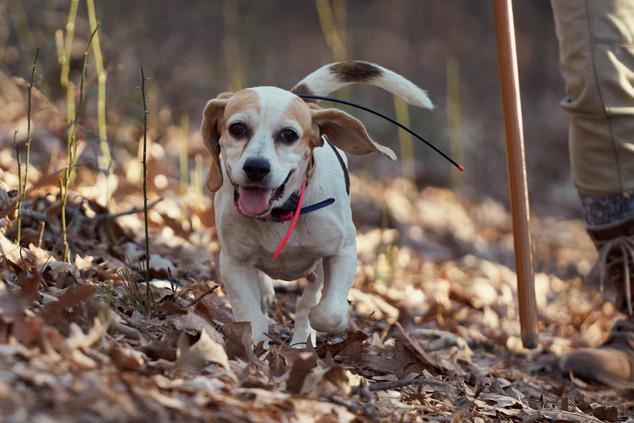 2020-01-05_beagles_a7r3_0362.jpg