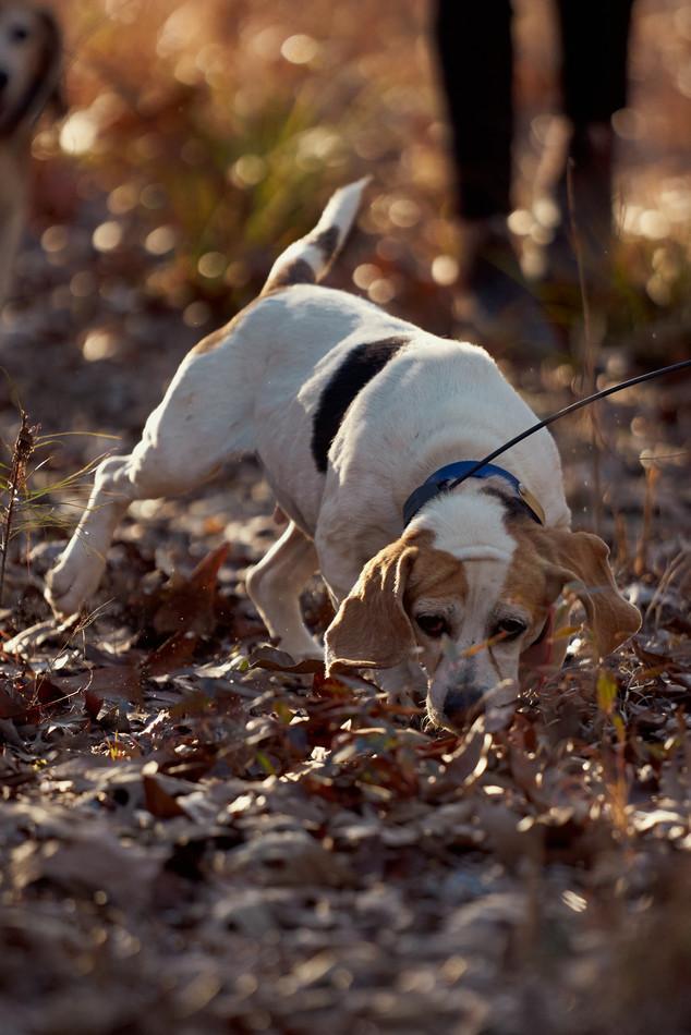 2020-01-05_beagles_a7r3_0276.jpg