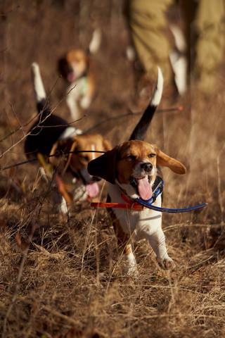 2020-01-05_beagles_a7r3_0242.jpg