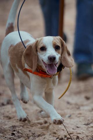 2020-01-05_beagles_a7r3_0356.jpg