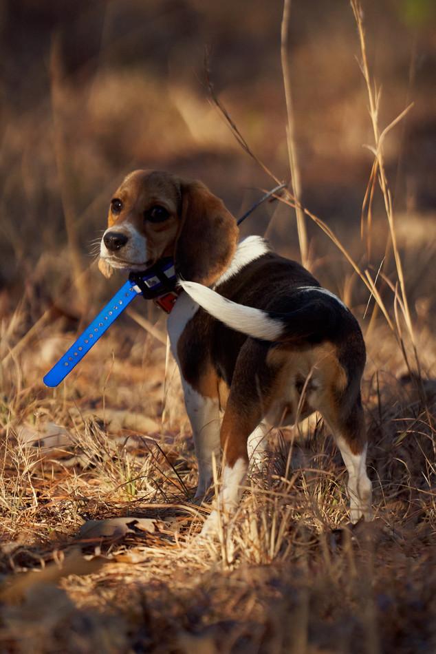 2020-01-05_beagles_a7r3_0293.jpg
