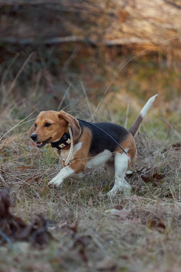 2020-01-05_beagles_a7r3_0377.jpg