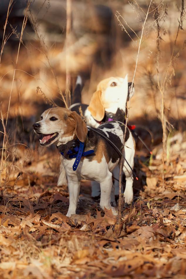 2020-01-05_beagles_a7r3_0023.jpg