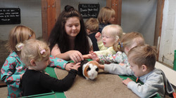 Stroking the Guinea Pigs
