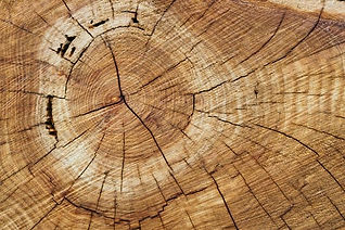 Timber 1.jpg