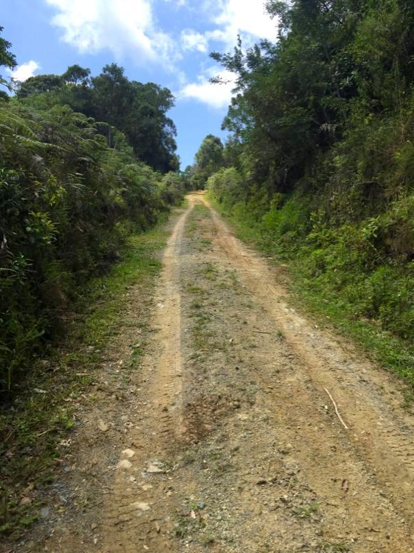 Trilha subida Serra do Pitoco