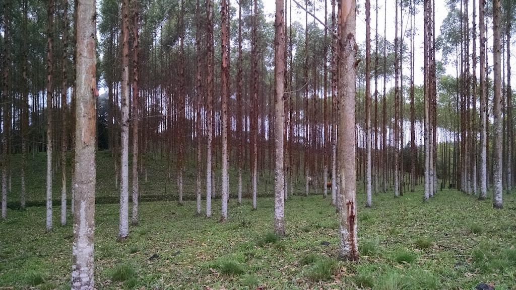 Trajeto com reflorestamento