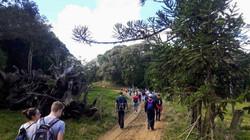 trajeto no platô da Serra Mirador