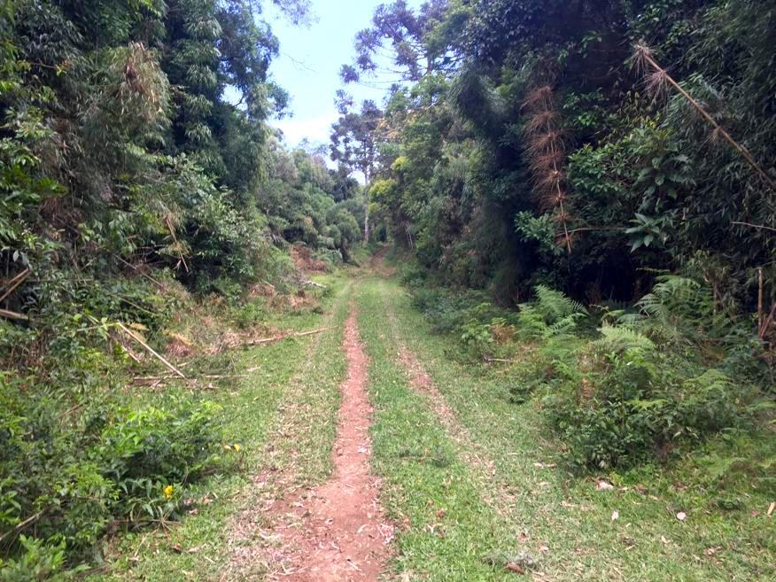 Trilha platô Serra do Pitoco