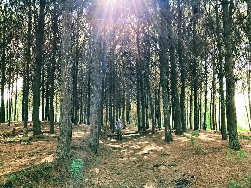 reflorestmento-pinus-pico-da-bandeira4