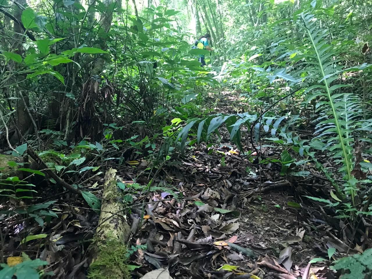 Trilha descida Serra do Pitoco