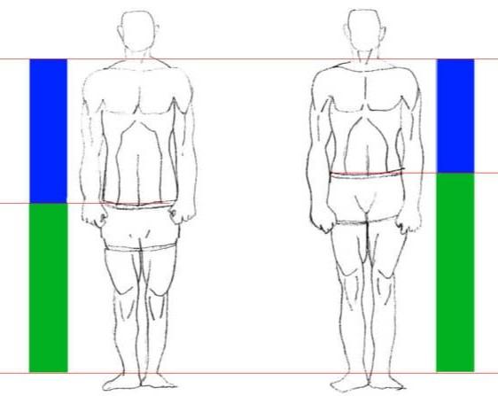morphologie en musculation breviligne vs longiligne