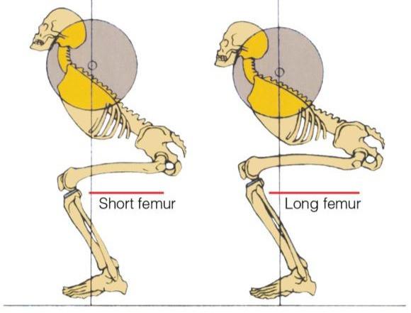 morphologies au squats pour femme