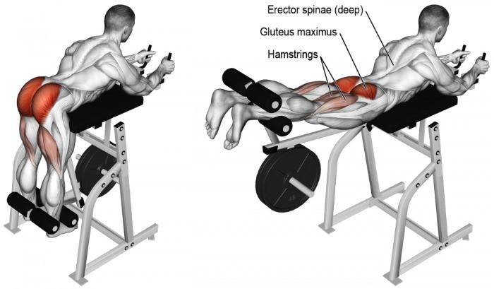 Démonstration du mouvement d'extension de hanche au reverse hyper en musculation pour développer ses fessiers.
