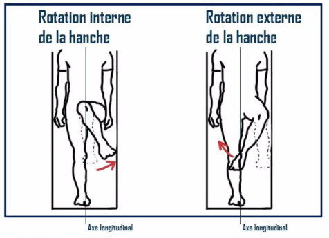 rotation interne et externe de la hanche