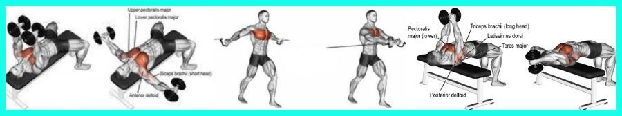 Exercices d'isolation pour les pectoraux en musculation pour femmes