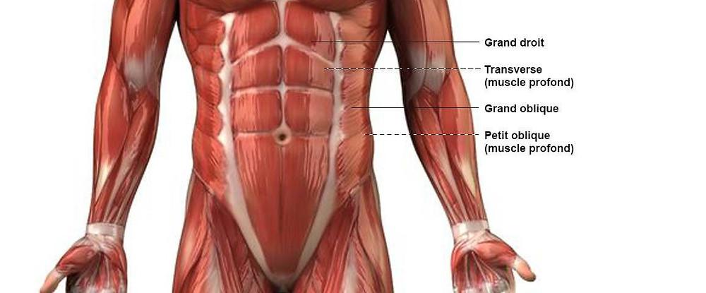 anatomie des abdos femme