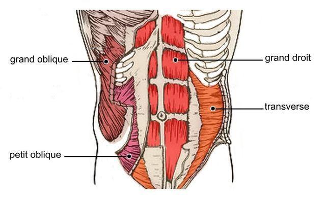 transverse abdos hypopressifs