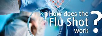 how flu shot works.jpg