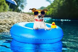 7 Tips to Keep Your Pet Cool