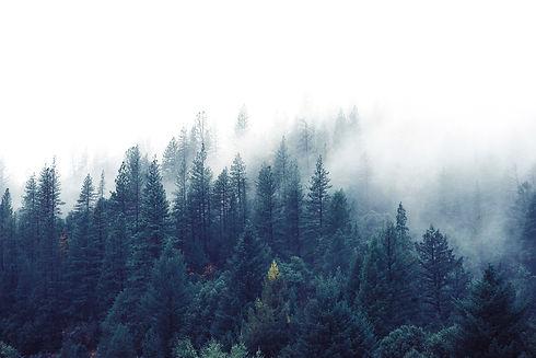Misty%20Woodland_edited.jpg