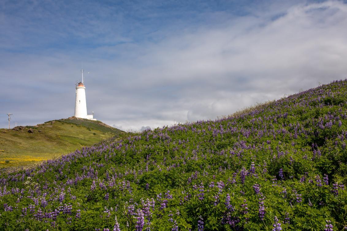 Reykjanesviti Leuchtturm in Island || Bohoray - Abenteuer Hochzeits und Elopement Fotografin Island - Victoria Rüf  || www.bohoray.com