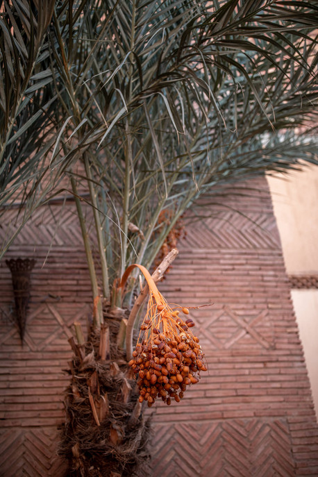 Dates in Palm Trees in Ourzazate | Travel and Landscape Photography in Morocco Africa || Bohoray - Adventure Elopement and Wedding Photographer - Victoria Ruef || www.bohoray.com