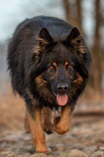 Hundefotograf Vorarlberg