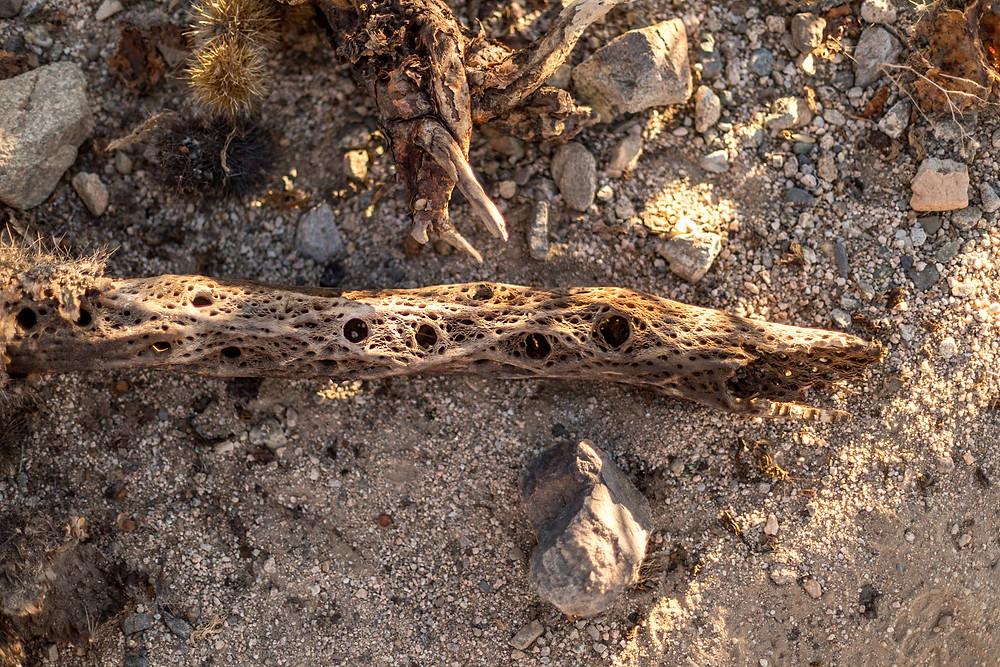 dry cacti