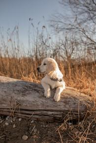 hunde fotograf bodensee