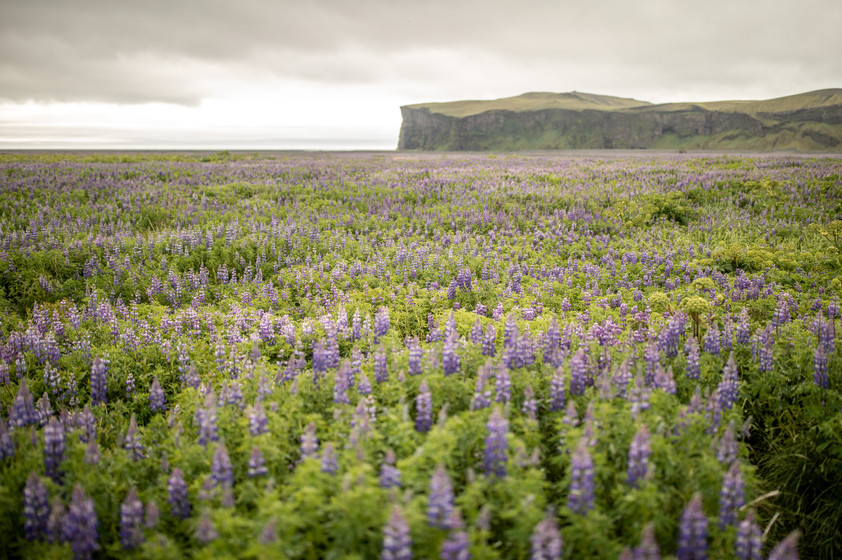 stunning nature in Iceland || Bohoray - Adventure Wedding and Elopement Photographer Iceland - Victoria Ruef  || www.bohoray.com