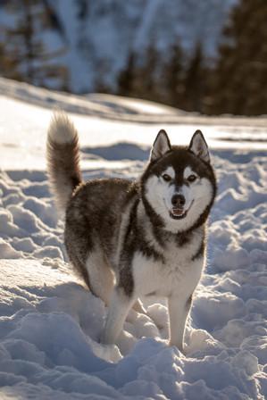 Hundefotografie Vorarlberg