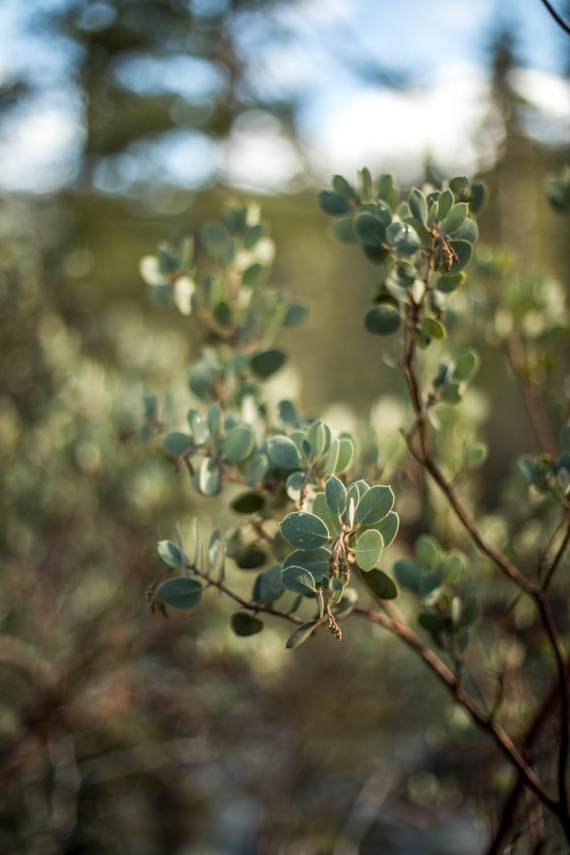 Leaves in Yosemite Nationalpark
