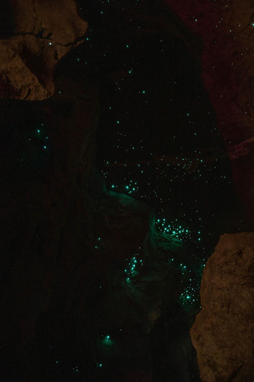 Glühwürmchen in Neuseeland in den Waipu Caves